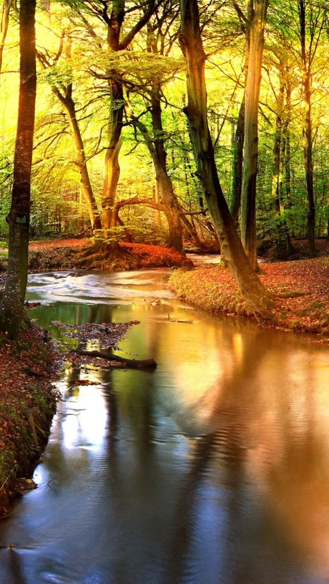Creek In The Forest iPhone Wallpapers Nature iphone