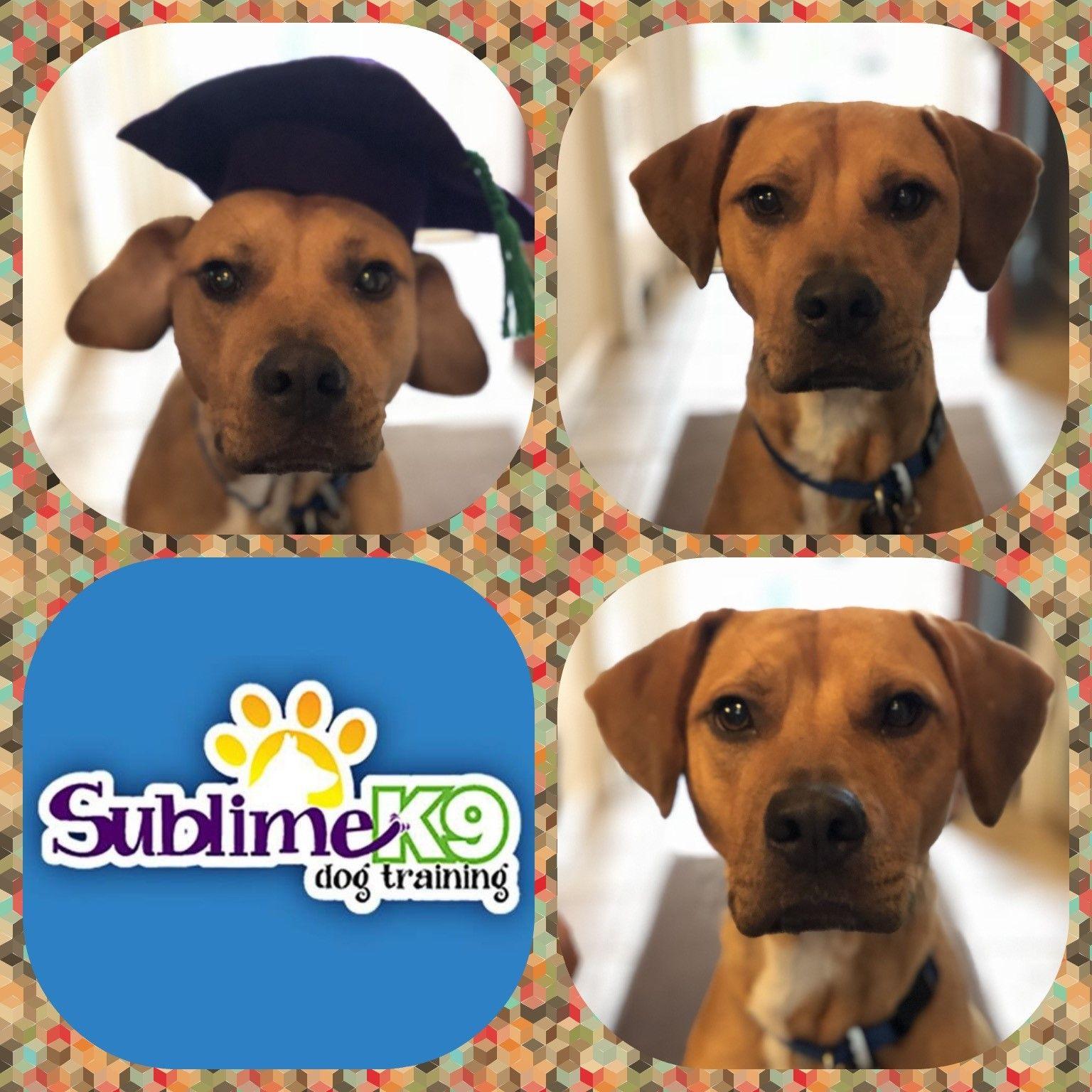 Long Island Dog Trainers Sublime K9 Dog Daycare Dogs Dog