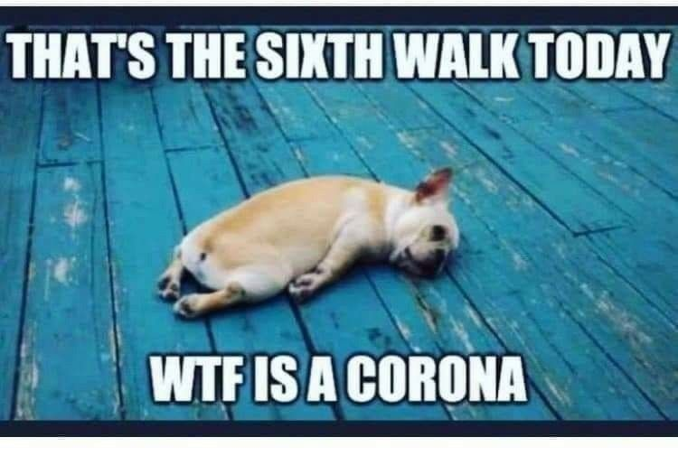 Pin By Mary Sacramento On Lockdown Memes Tired Funny Dog Memes Funny