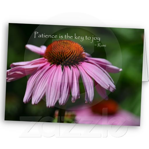 Echinacea With Patience Quote Patience Quotes Patience Cards