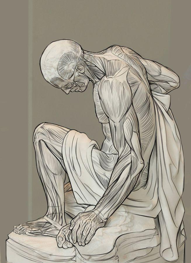 Artists Who Use Anatomy In Art Human Anatomy Anatomy Pinterest