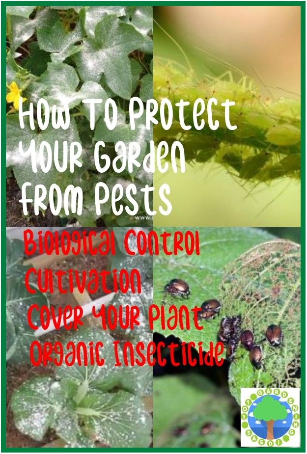 Safe And Effective Ways Of Natural Pest Control Natural Pest Control Pests Pest Control