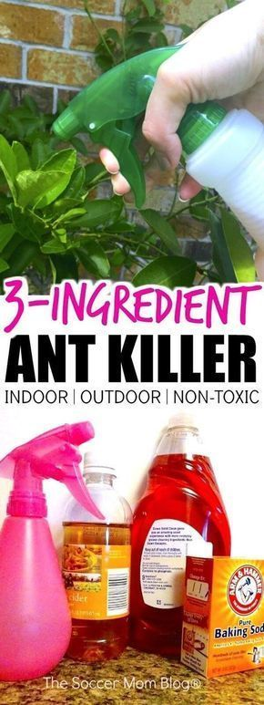 Get Rid of Pesky Ants for GOOD with These 3 Household Ingredients