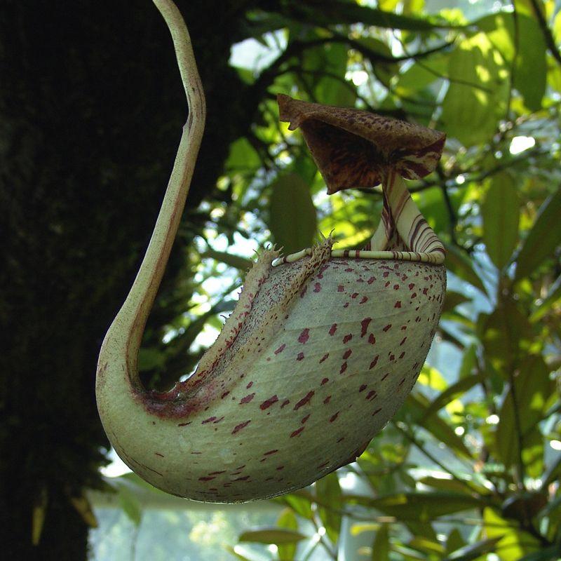 plante carnivore oiseau