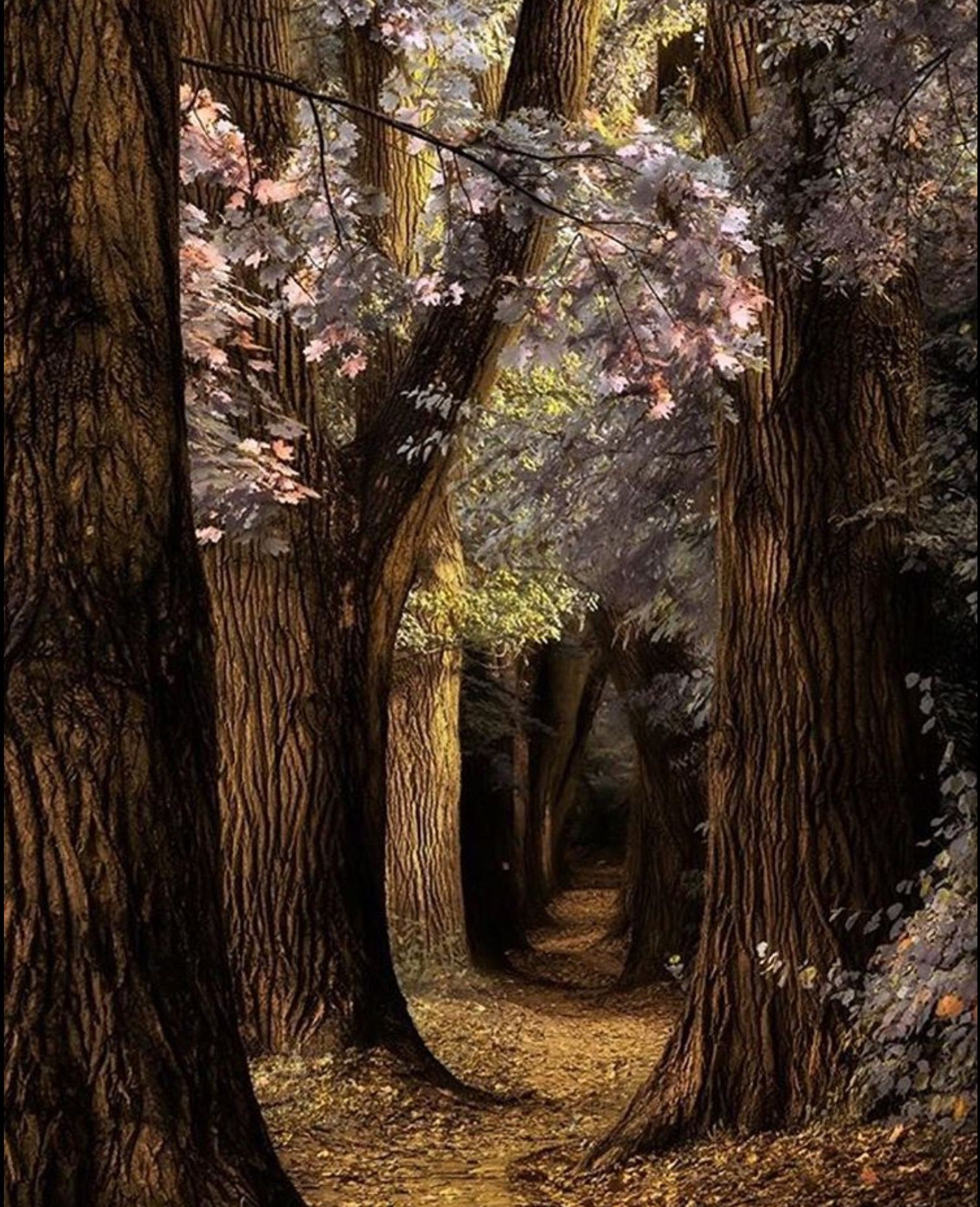 Pin By John Todd On Scenery Mystical Forest Beautiful Nature Beautiful Landscapes