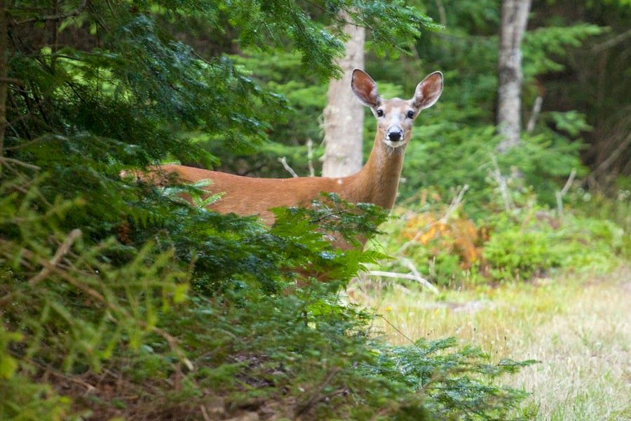 A Photo in the life of: I like Grandkids, deer and Bixi bikes.Here is anot...