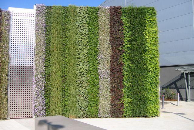 Pared verde artificial muro verde muros verdes for Muros y fachadas verdes jardines verticales