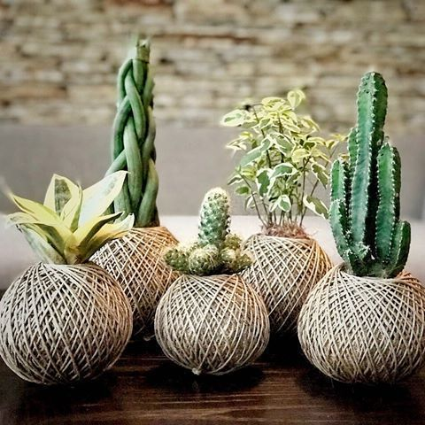 Kokedama: What it is, +32 Amazing Arrangements to get inspired