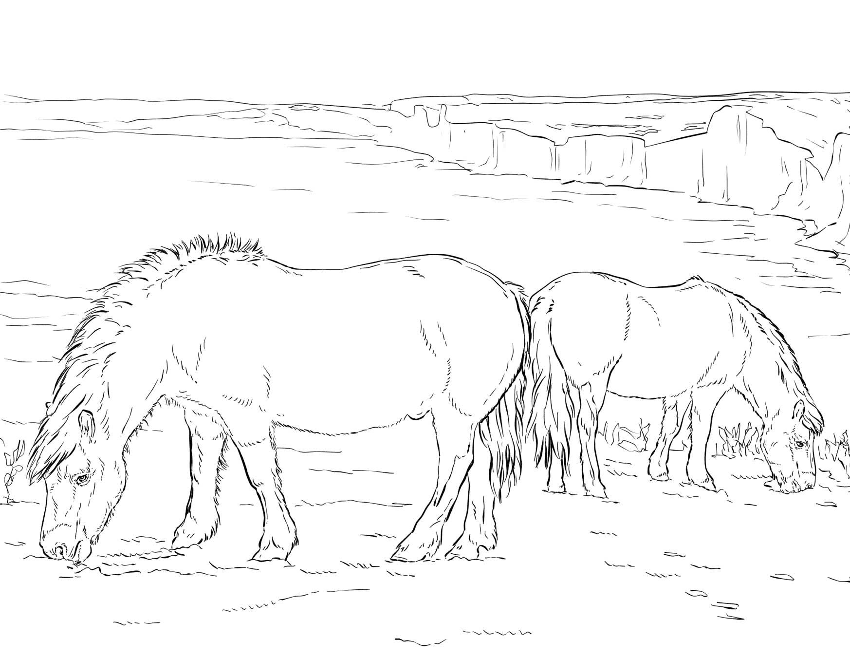 Two Ponies Grazing Coloring Page Horse Coloring Pages Animal Coloring Pages Horse Coloring Books