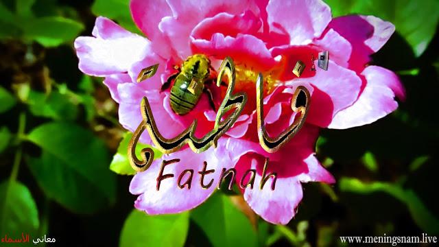 معنى اسم فاطنة وصفات حاملة هذا الاسم Fatnah Plants Rose Flowers