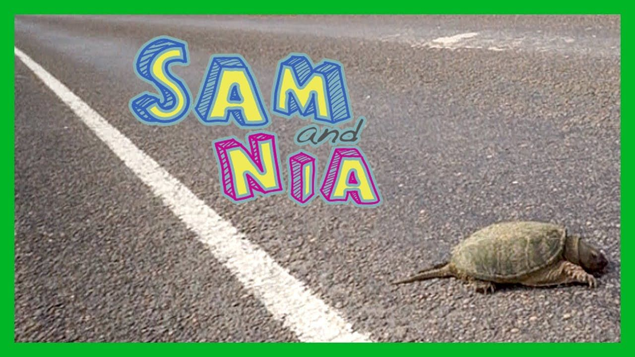 That Time We Almost Saved A Turtle S Life Sam And Nia Turtle Life Turtle