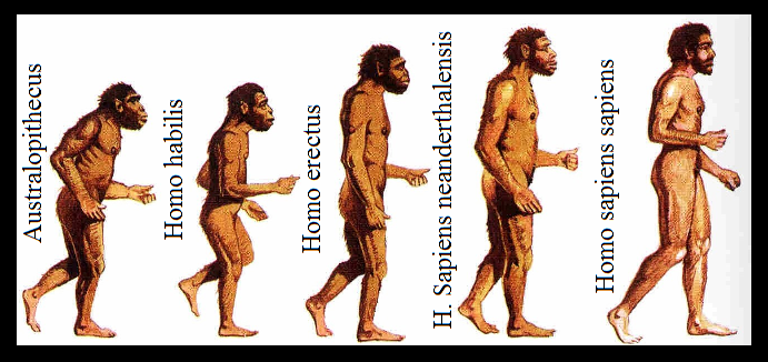 Les Diferentes Etapes Del Desenvolupament De L Home Evolucion Del Hombre La Prehistoria Para Ninos Hominidos