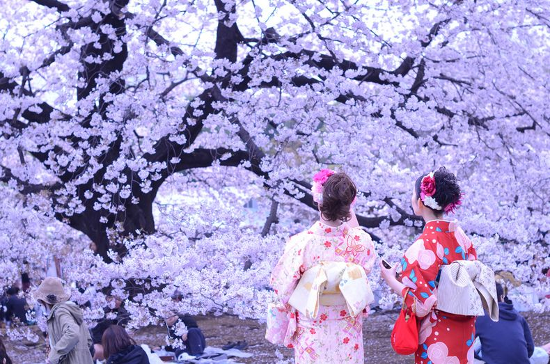 When To Visit Japan Hanami Japan Visit Japan