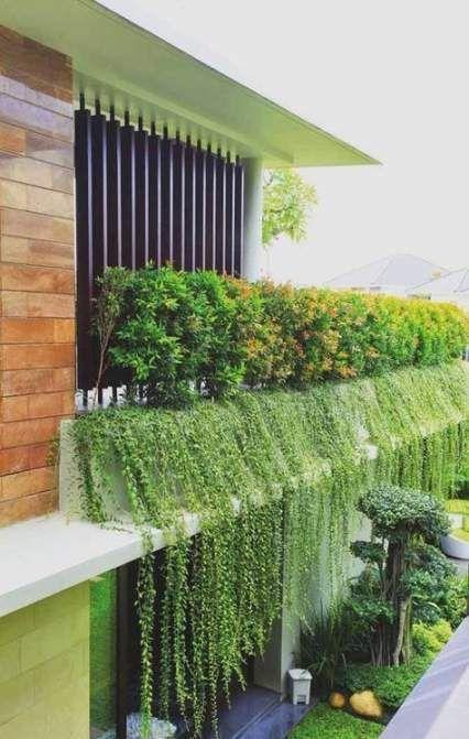 Best garden design pergola vines Ideas Best garden design pergola vines Ideas