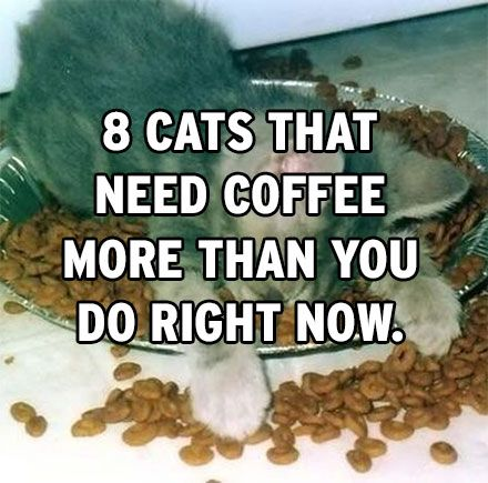 this cat needs more coffee than you do