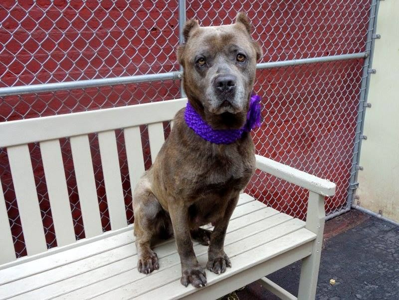Pin By Anneliese Galiano On Ny Nj Local Dogs In Dire Need Of