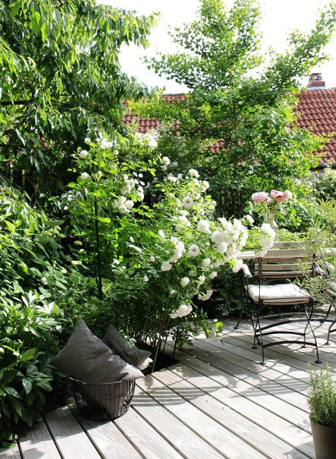 Im Garten Mit Mitglied Oceanside Gartnern Lehrt Vor Allem Eines Geduld Gartengestaltung Garten Garten Und Outdoor