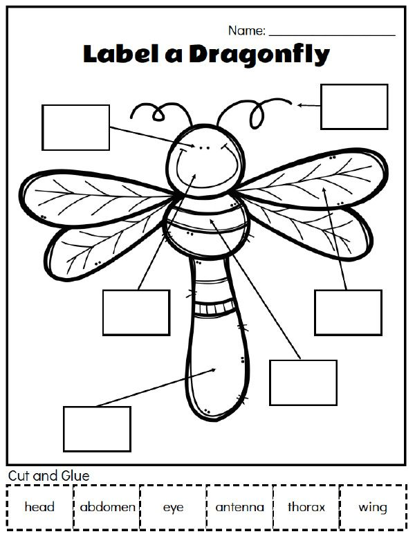 Printable Preschool Bug Activities For Learning Fun
