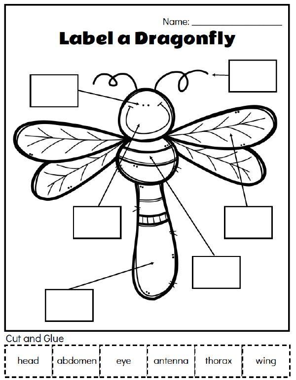 Printable Preschool Bug Activities For Learning & Fun