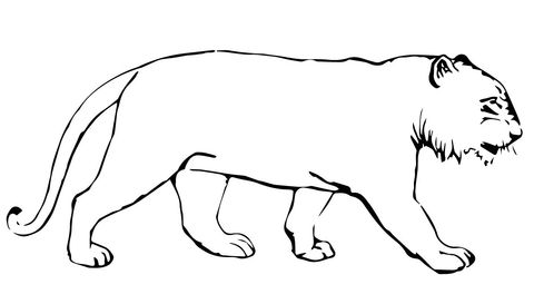 Tiger Without Stripes Coloring Page Coloring Pages Animal