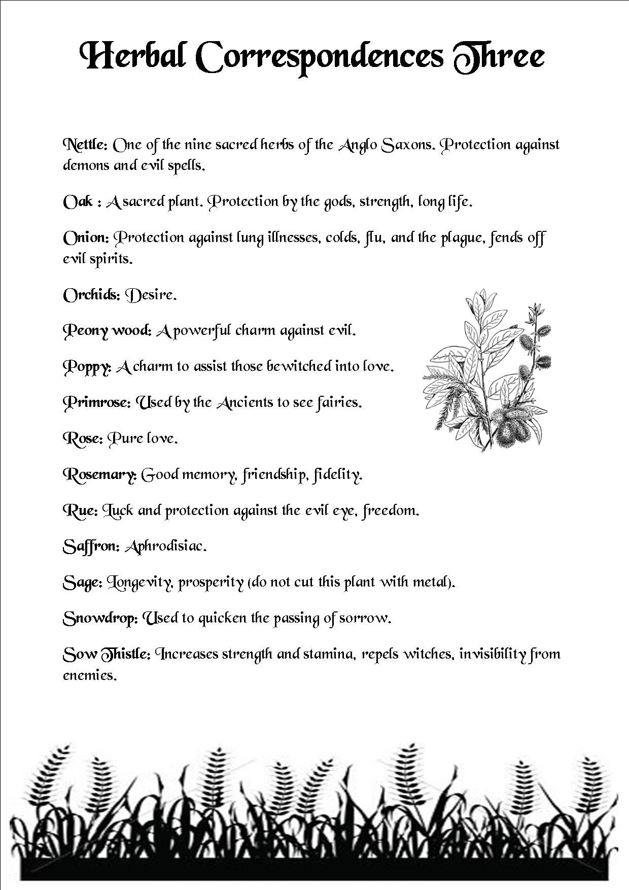 Magical Meanings Of Herbs - Year of Clean Water