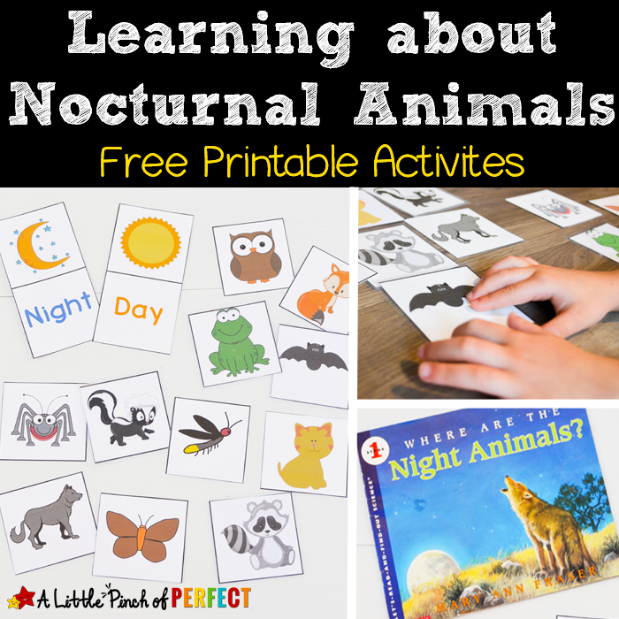 nocturnal animals preschool lesson plans learning about nocturnal animals free printable activities 418