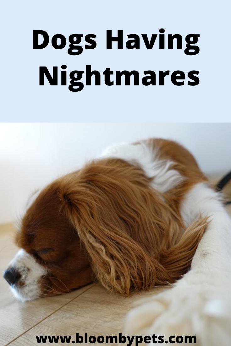 Dogs Having Nightmares Dog Crying Dogs Sleeping Dogs