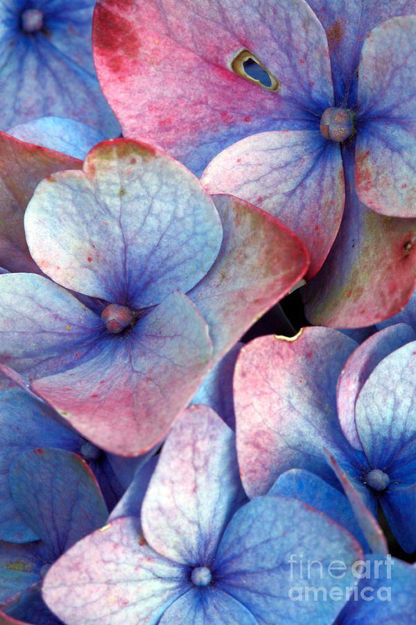 red & blue flowers by Gaspar Avila