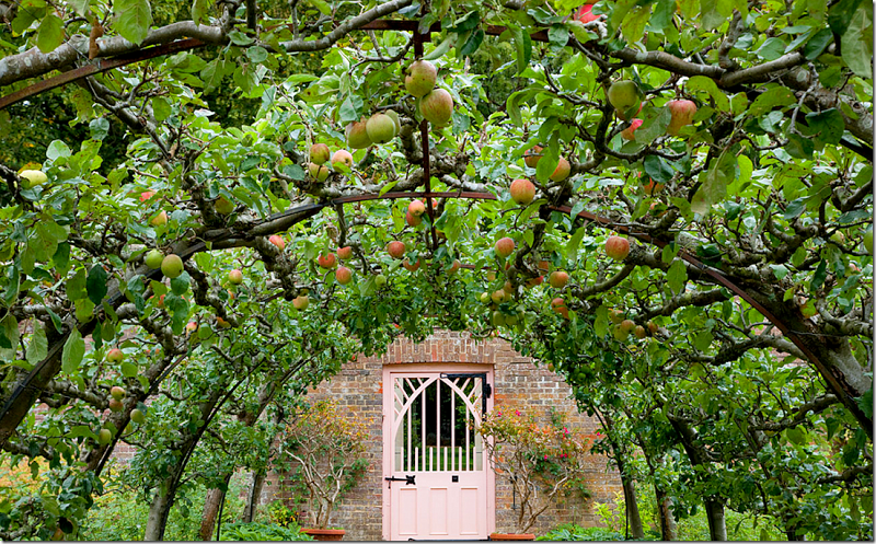Espalier on Pinterest | Fruit Trees, Espalier Fruit Trees ...