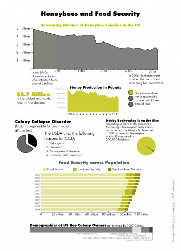 Honeybees And Food Security Infographic Food Security