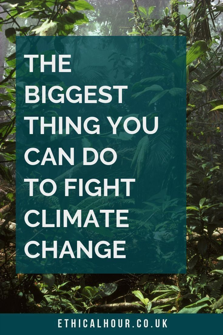 Wondering What You Can Do To Stop Climate Change Many -9234
