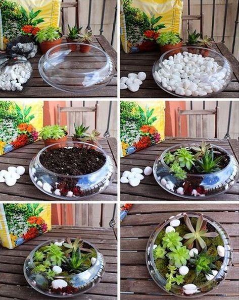 Small garden in a glass bowl – arrangements ideas with succulent plants