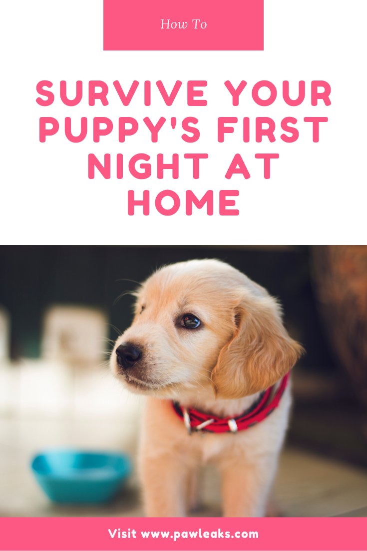 How to Survive Your Puppy's First Night at Home First