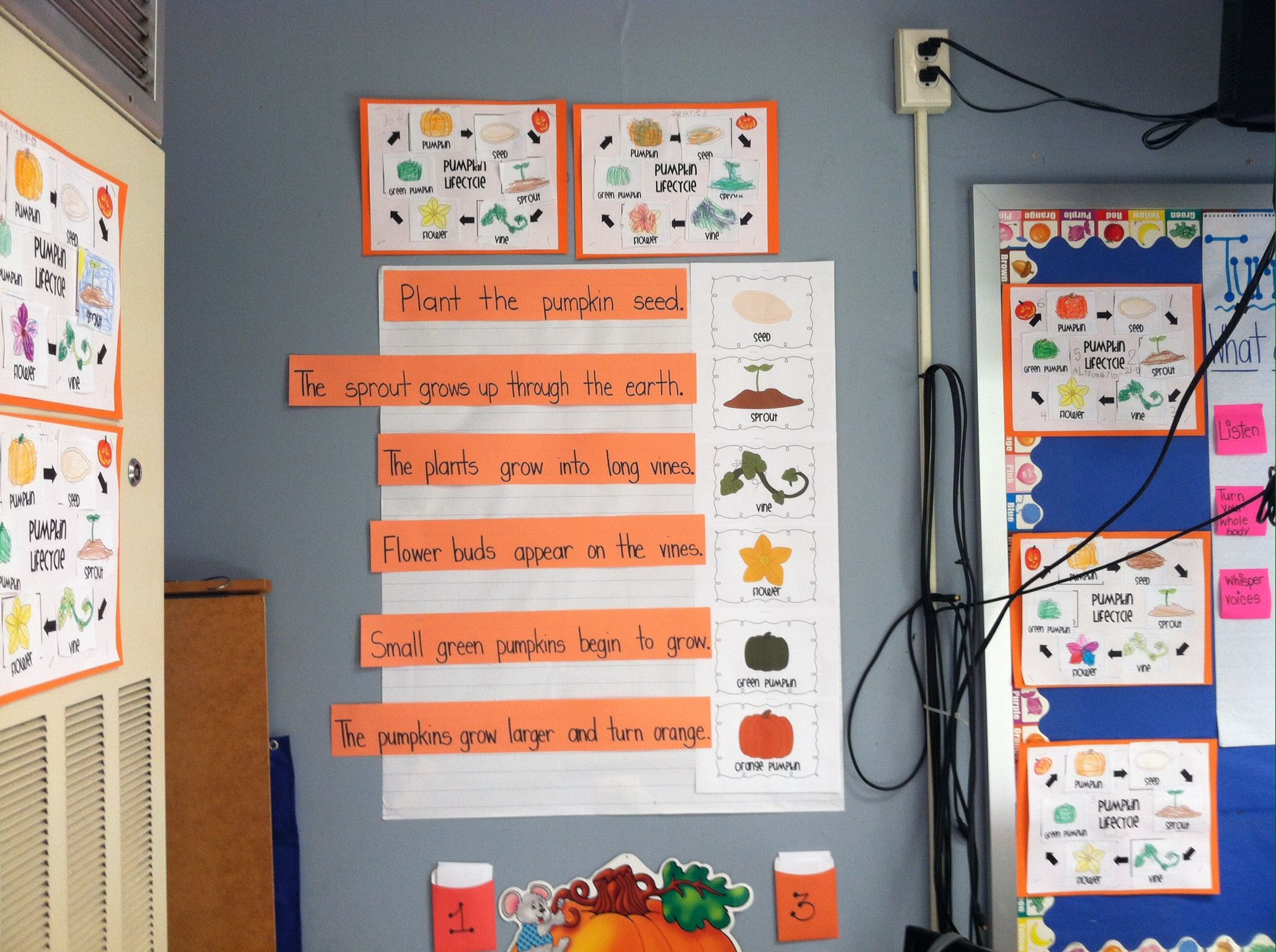 Pumpkin Lifecycle Sequence Sentence Strips And Activity