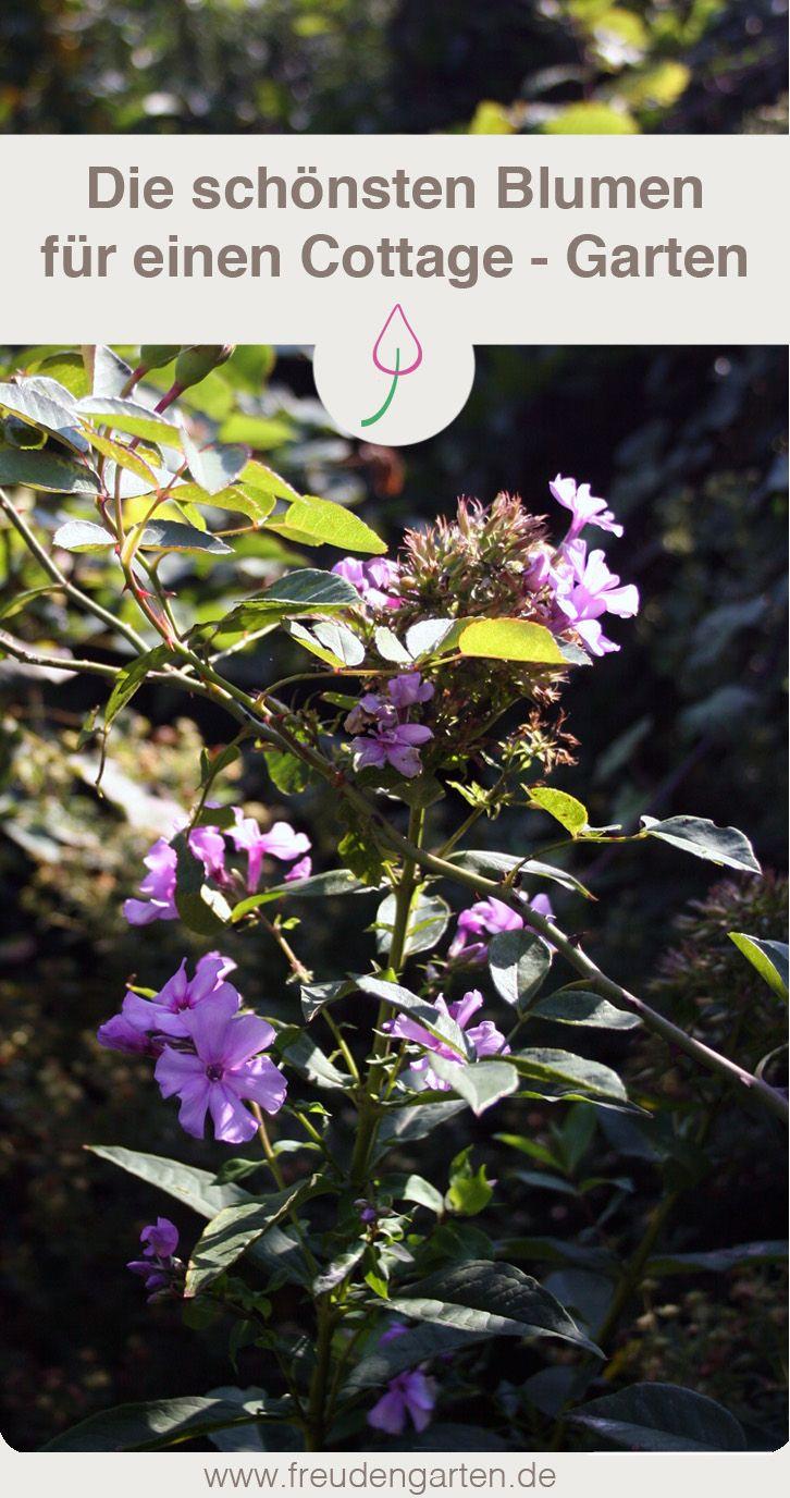 Die Schönsten Pflanzen, Um Einen Bauerngarten Anzulegen. #Bauerngarten # Cottagegarten #Blumen #Blumenbeet #Pflanzen #Gartengestaltung