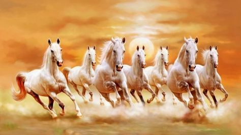 Cavalo حصان Horse Wallpaper White Horses Horse Painting