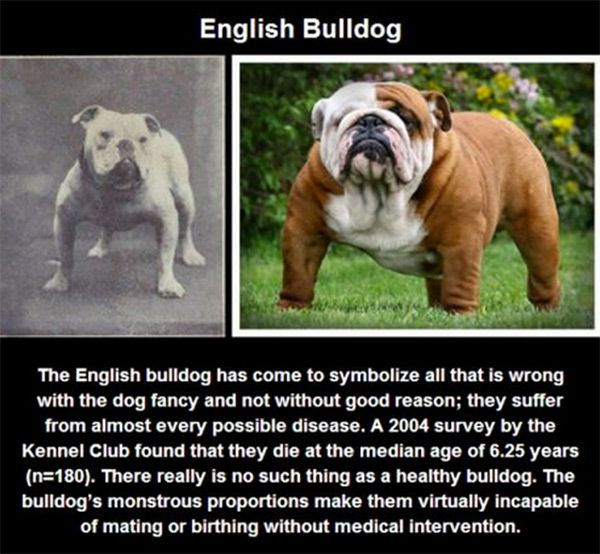 When You Realize The Truth About Purebred Dogs It Will Make You