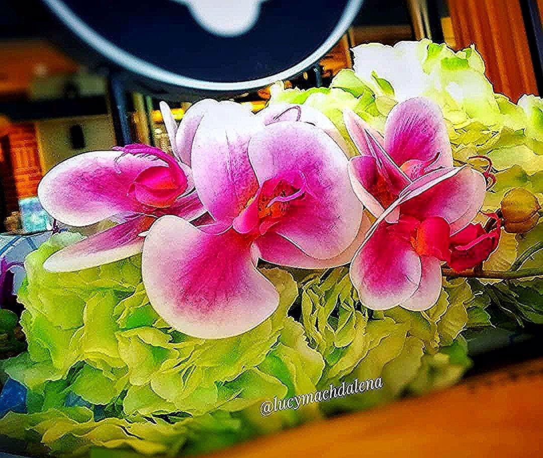 🌿10 November 2019 🌿 . Selamat sore sayang 😘😘 . @uploadkompakan #uploadkompakan #ukungunyu #kompakerstangerang #genkabuabu23 . . . . . . . . . . . . #from_your_perspective #pics_at_home #friends_moms #flowers #flower_beauties_ #flowerstagram #flowerstyle #anggrekungu #anggrek #bunga #tanamanhias #tanaman #tanamannarsis #photography #photohp
