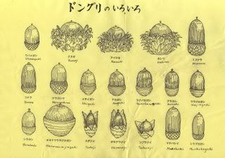 Acorn Identification Species With The And Beechnut Chart Below