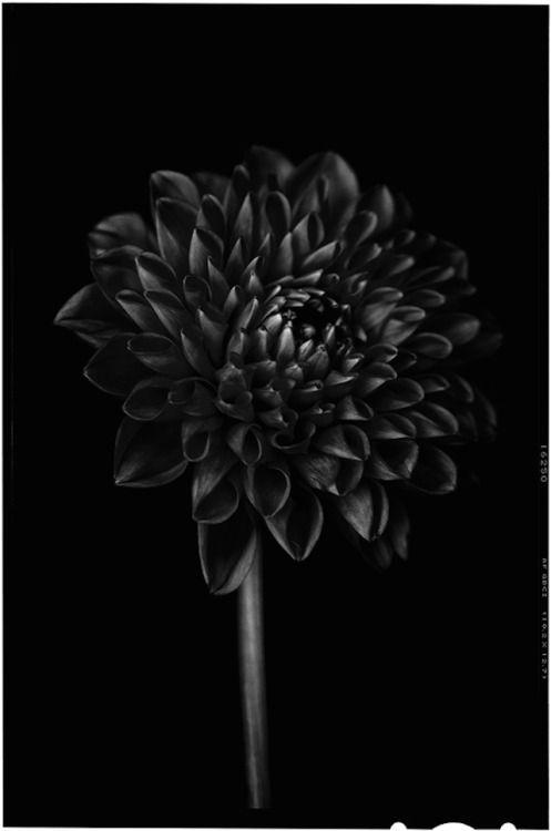 Black White Pain Land