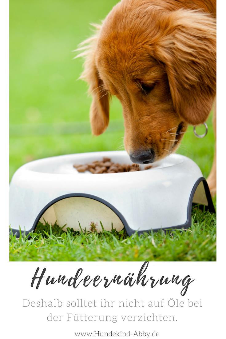 Ol Im Hundefutter Mit Bildern Hunde Futter Hunde Hundefutter