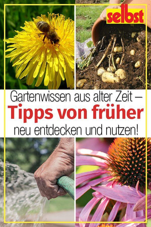 Gärtnertipps #kleinekräutergärten