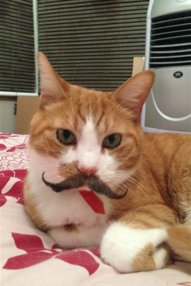 Stacheify // Cat with a Mustache