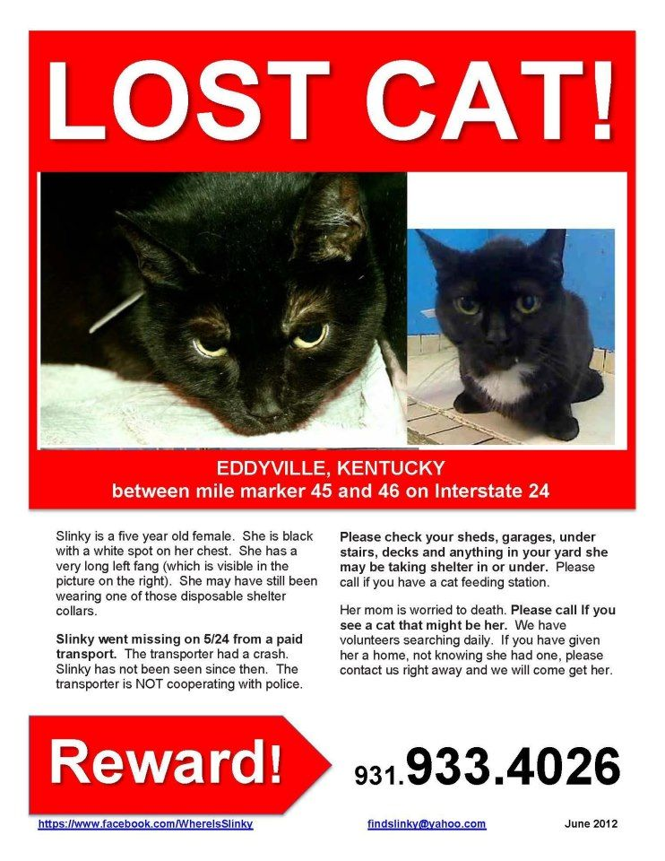 Lost Cat Until We Know She Is Found Please Keep An Eye Out Losing A Pet Lost Cat Cats