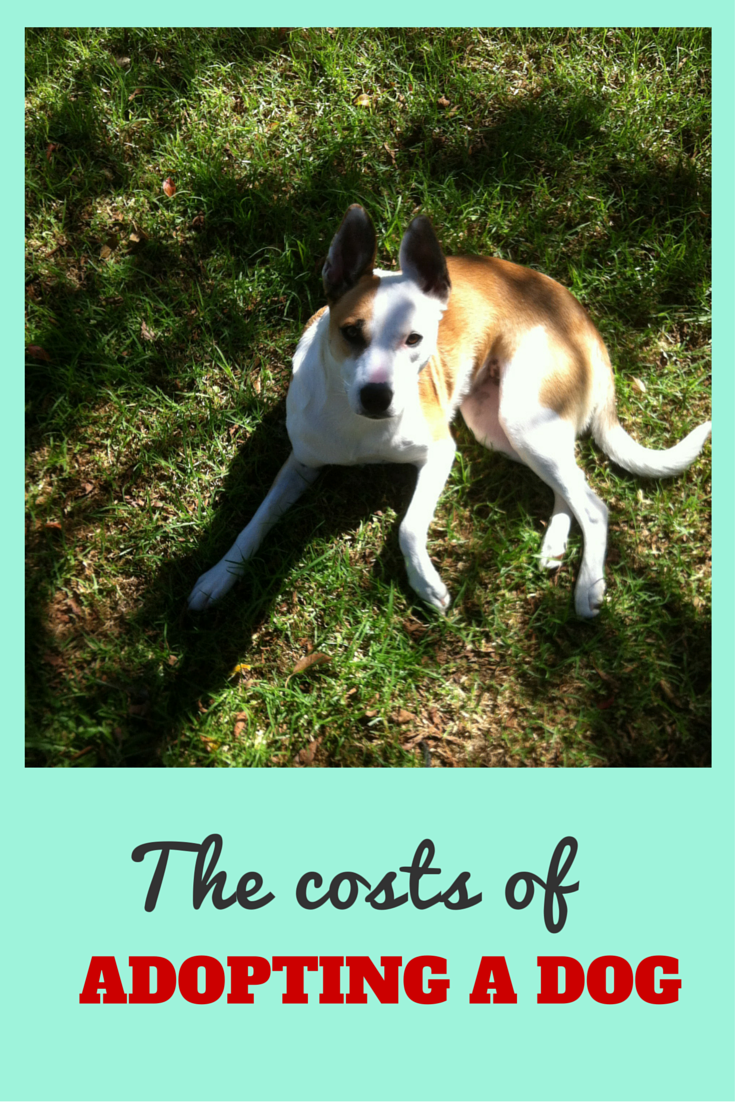 How Much Does It Cost To Get A Dog Nz Muse Dog Adoption Dogs Adoption Costs