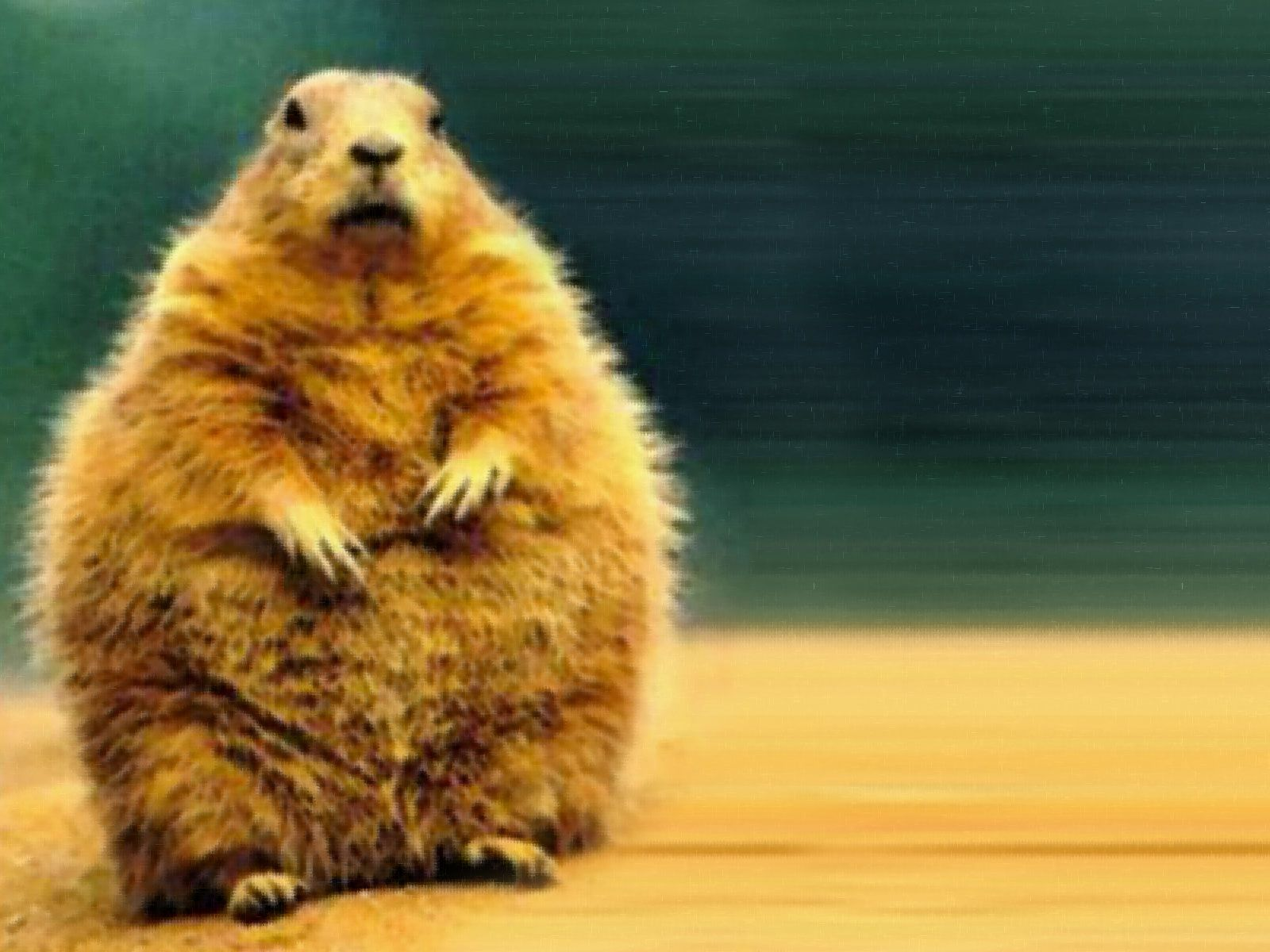 best groundhog images groundhog day ha ha and  in honor of ground hogs day