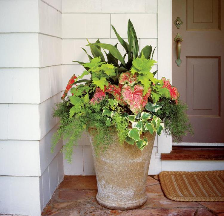 Große Blumenkübel bepflanzen – 60 Ideen, Bilder und Vorschläge ...