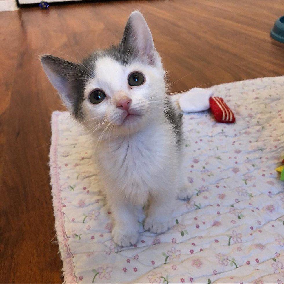 Pin By Heidi Pred On Kittens Kittens Cute Animals Feral Kittens