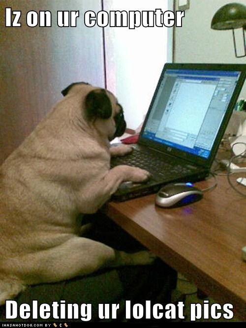 Iz On Ur Computer Cute Pug Puppies Cute Pugs Pugs
