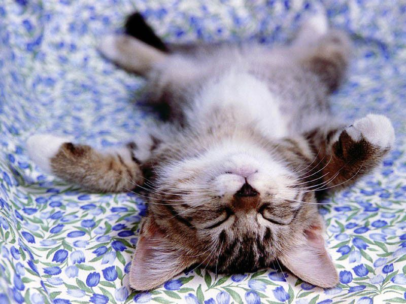 Sleeping Cat. #cat #sleeping #photography